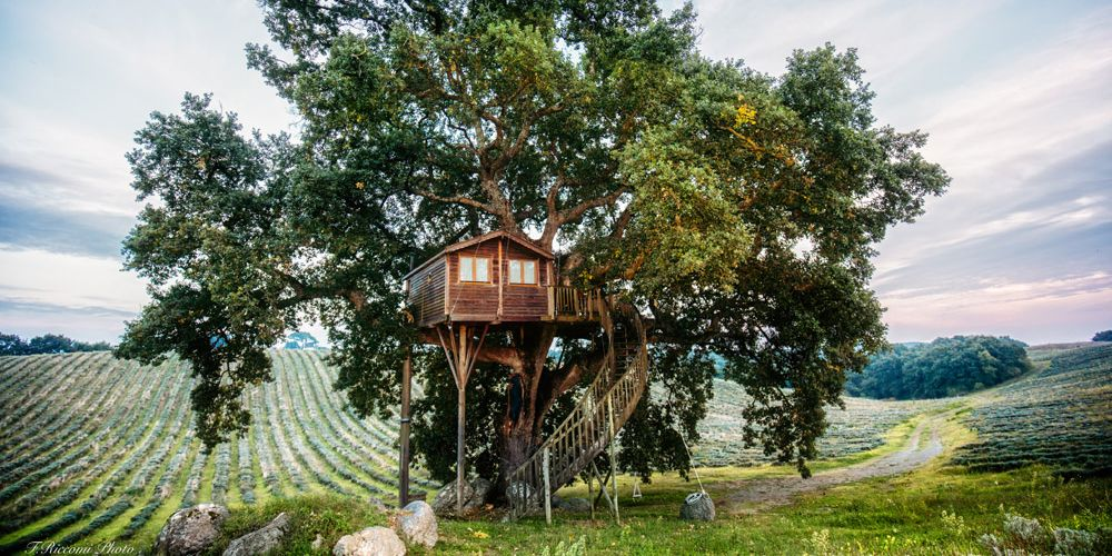 11 Best Treehouse Hotels Rentals In The World For 2019 Luxury