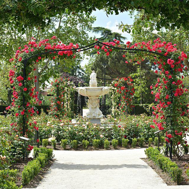 la rosaleda jardines de el retiro, madrid
