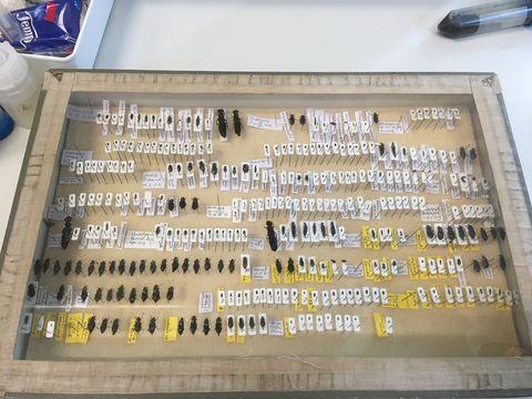 De insecten die eerder in het Vondelpark zijn gevangen, zijn tentoongesteld in een doos.