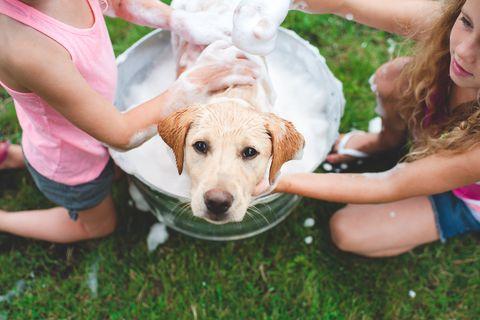 100 Best Girl Dog Names Cute Unique Female Puppy Name Ideas