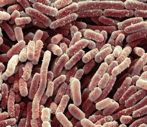 Researchers Discover Method to Make Bacteria Harmless