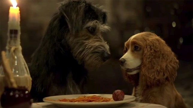 Remaking Lady The Tramp For Disney With Real Dogs Was Ruff