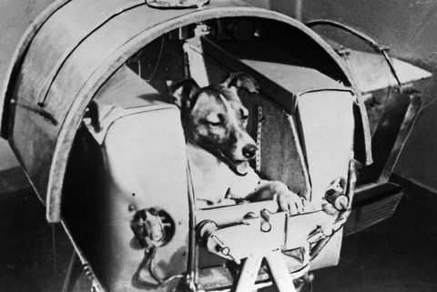 1957年にロシア(ソ連)の宇宙飛行犬となりスプートニク2号に搭乗したライカ