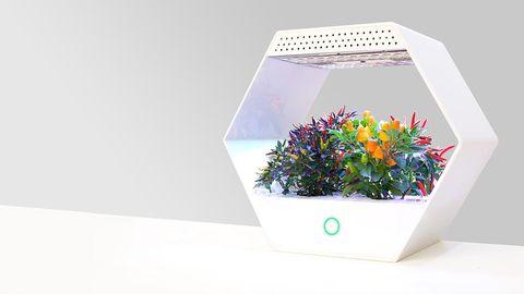 Flowerpot, Grass, Plant, Botany, Flower, Font, Houseplant, Wildflower, Box, Rectangle,