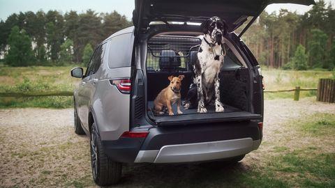 Vehicle, Car, Automotive exterior, Horse, Trunk, Sport utility vehicle, Bumper, Mini SUV, Metal,