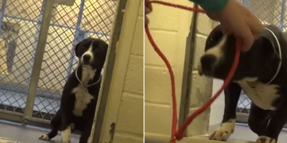 Watch The Perfect Moment This Shelter Dog Realizes He's Being Adopted Forever