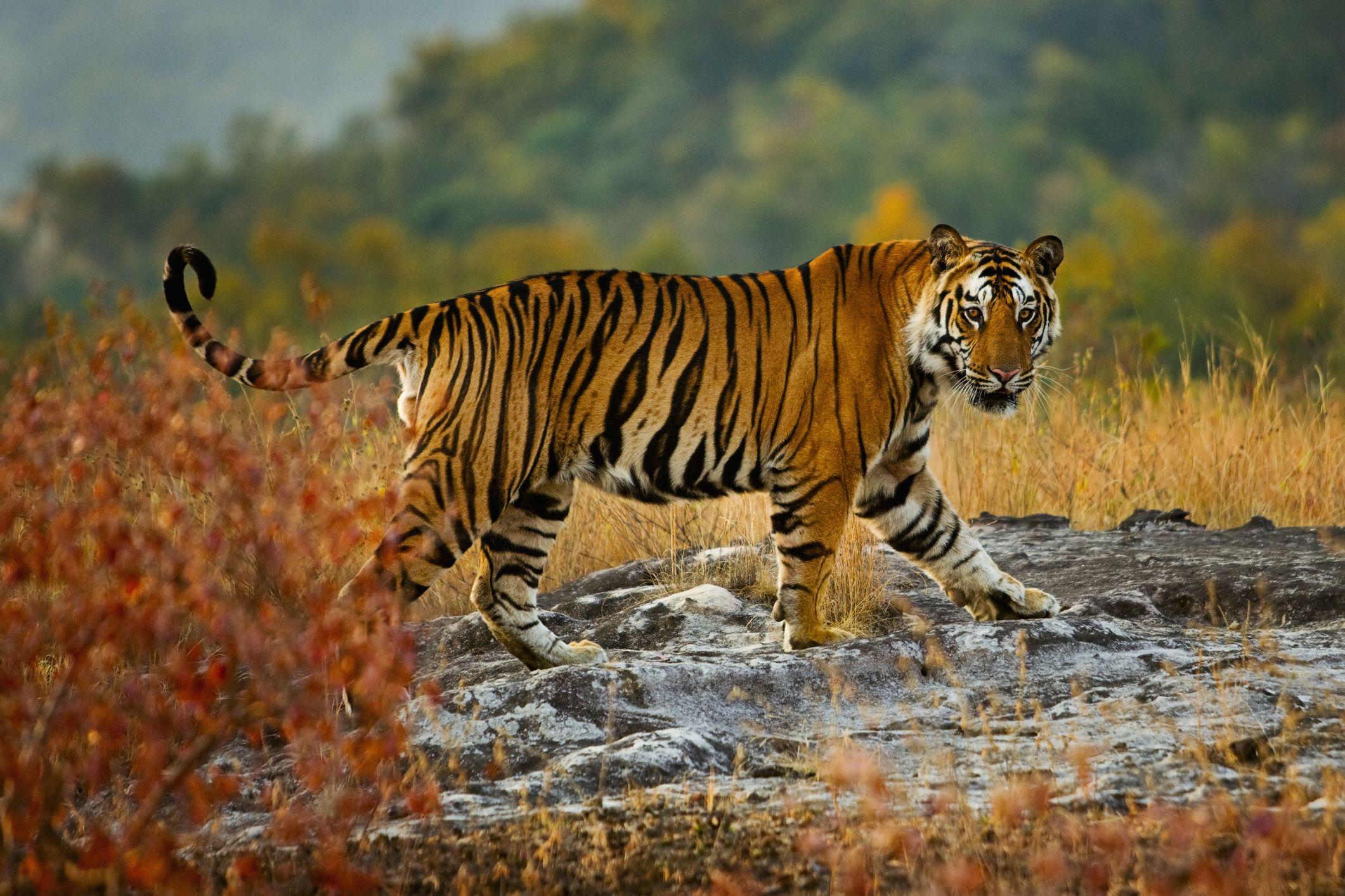La mejor noticia para los tigres