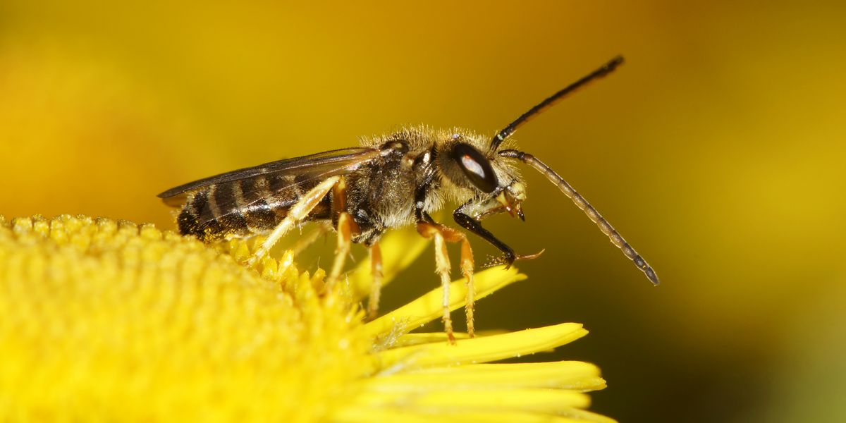 How to Get Rid of Sweat Bees When They Won't Leave You Alone, According to Experts