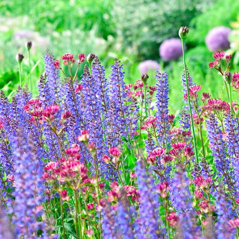 late springearly summer garden