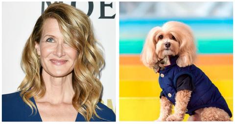 Hair, Dog, Canidae, Hairstyle, Dog breed, Companion dog, Lhasa apso, Blond, Carnivore, Long hair,