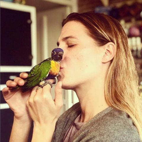 Bird, Beauty, Eye, Eating, Parrot, Hand, Shoulder, Parakeet, Budgie, Organism,