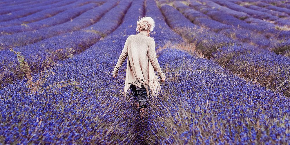 How To Use Lavender Oil Lavender Oil For Hair Skin And Sleep