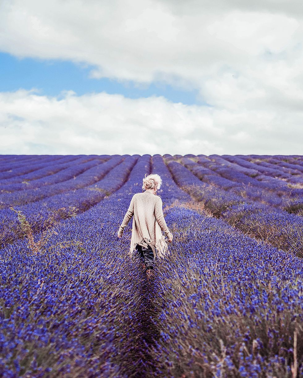 Everything You Need to Know About Using Lavender Oil