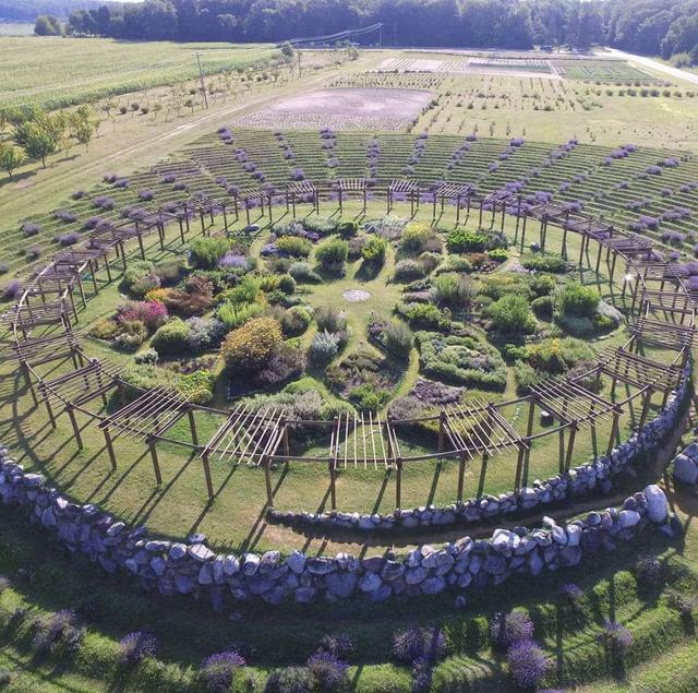 spiral lavender maze