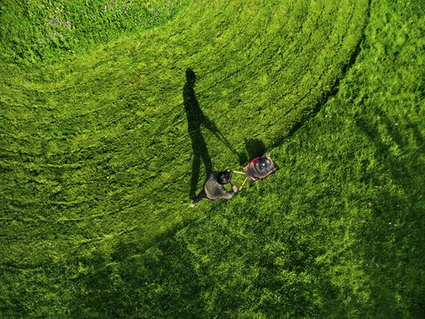 Grass, Green, People in nature, Field, Grassland, Groundcover, Plantation, Agriculture, Lawn, Hedge,