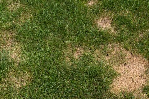 how to fix dry grass and brown spots on your lawn, lawn care, diy yard care