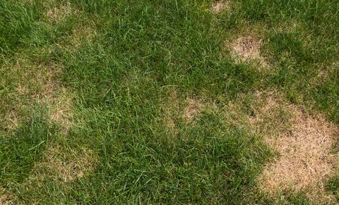 Lawn with brown patches