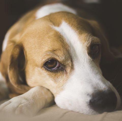 hot spots on dogs