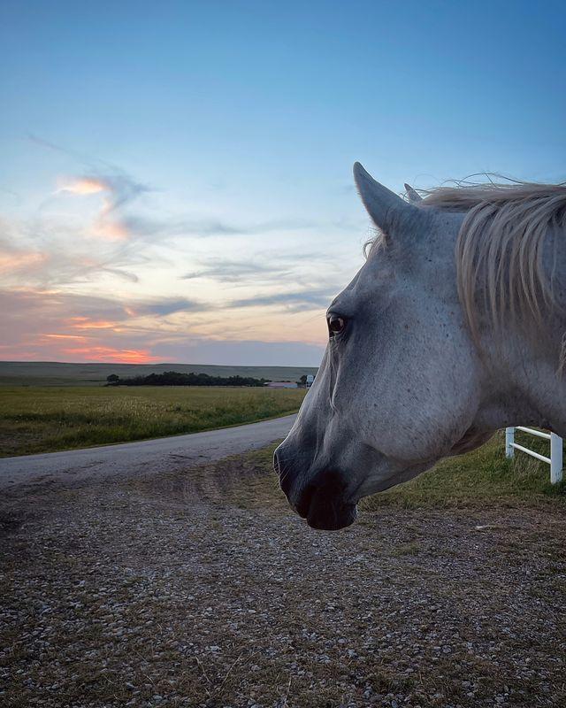 ladd drummond's horse lb