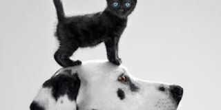 Dog, Carnivore, White, Snout, Style, Terrestrial animal, Felidae, Monochrome photography, Cat, Small to medium-sized cats,