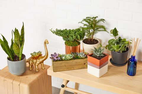 The Right Plants Will Make Your Home Look Better—And Make You Happier and Healthier