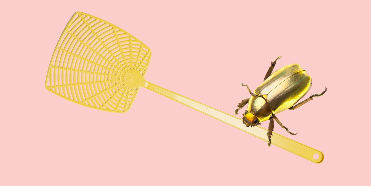 Expert Advice on Keeping Your Home Bug Free