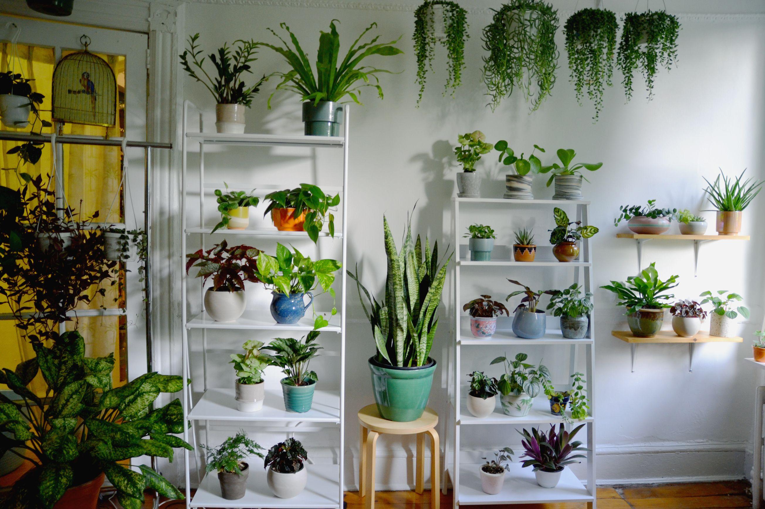 This Botanic Designer Runs a Secret Plant Shop Out of Her Brooklyn Apartment