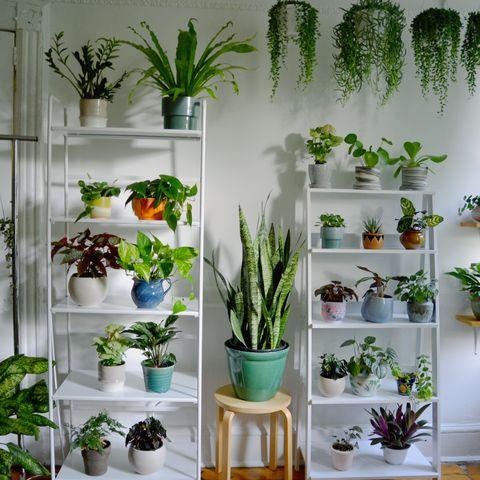 Houseplant, Green, Flowerpot, Plant, Flower, Shelf, Botany, Room, Interior design, Vascular plant,