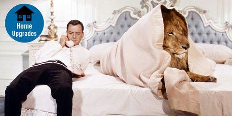 Felidae, Room, Linens, Textile, Furniture, Comfort, Leisure,