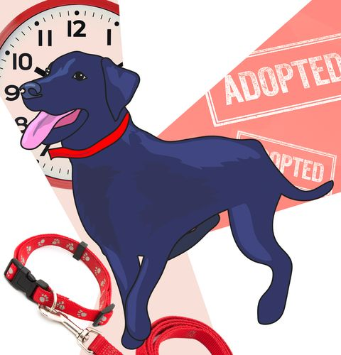 Dog, Canidae, Dog breed, Carnivore, Sporting Group, Labrador retriever, Leash, Dog collar, Great dane, Pointing breed,