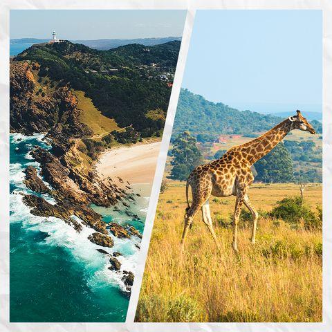 giraffe and australia coast