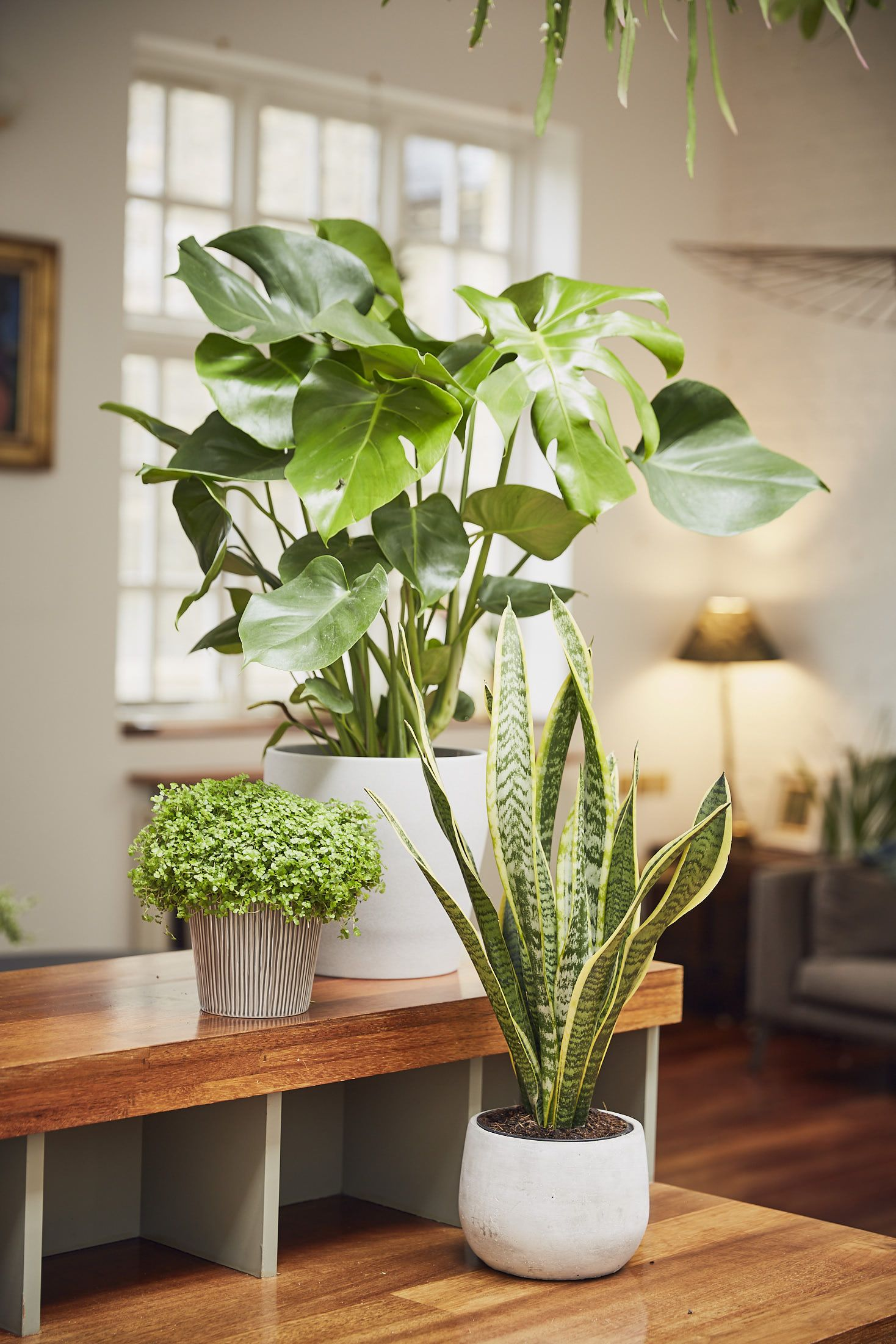 10 most popular houseplants on Instagram