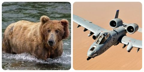Wildlife, Grizzly bear, Brown bear, Adaptation, Technology, Bear, Vehicle, Photography, Carnivore, Travel,