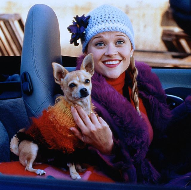 legally blonde, bruiser, elle woods, reese witherspoon