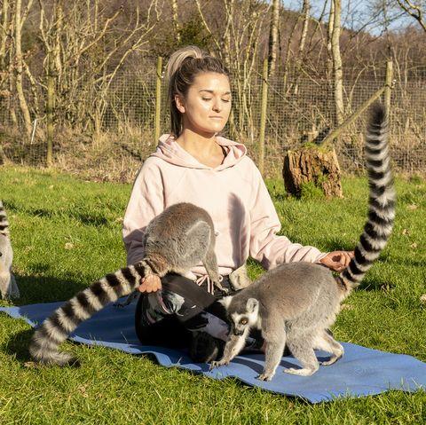 Lemur yoga