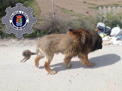 perro leon murcia