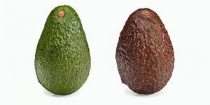 avocado-soort