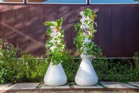 Flowerpot, Plant, Flower, Herb, Houseplant, Ivy, Vase, Garden, Still life,