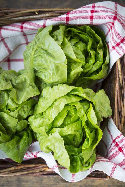 Types Of Lettuce Different Varieties Of Lettuce