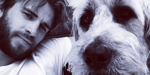 Liam Hemsworth con su perro