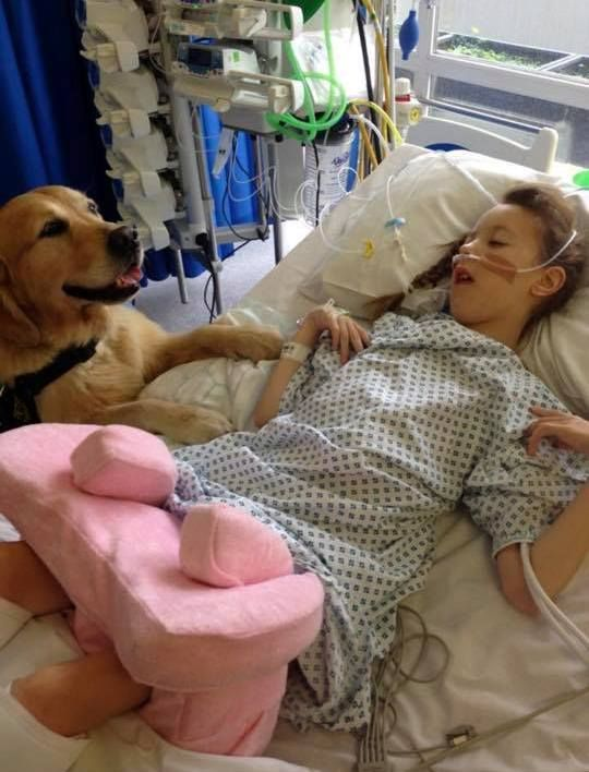 A team of therapy Golden Retrievers help children overcome anxiety at Southampton Children's Hospital
