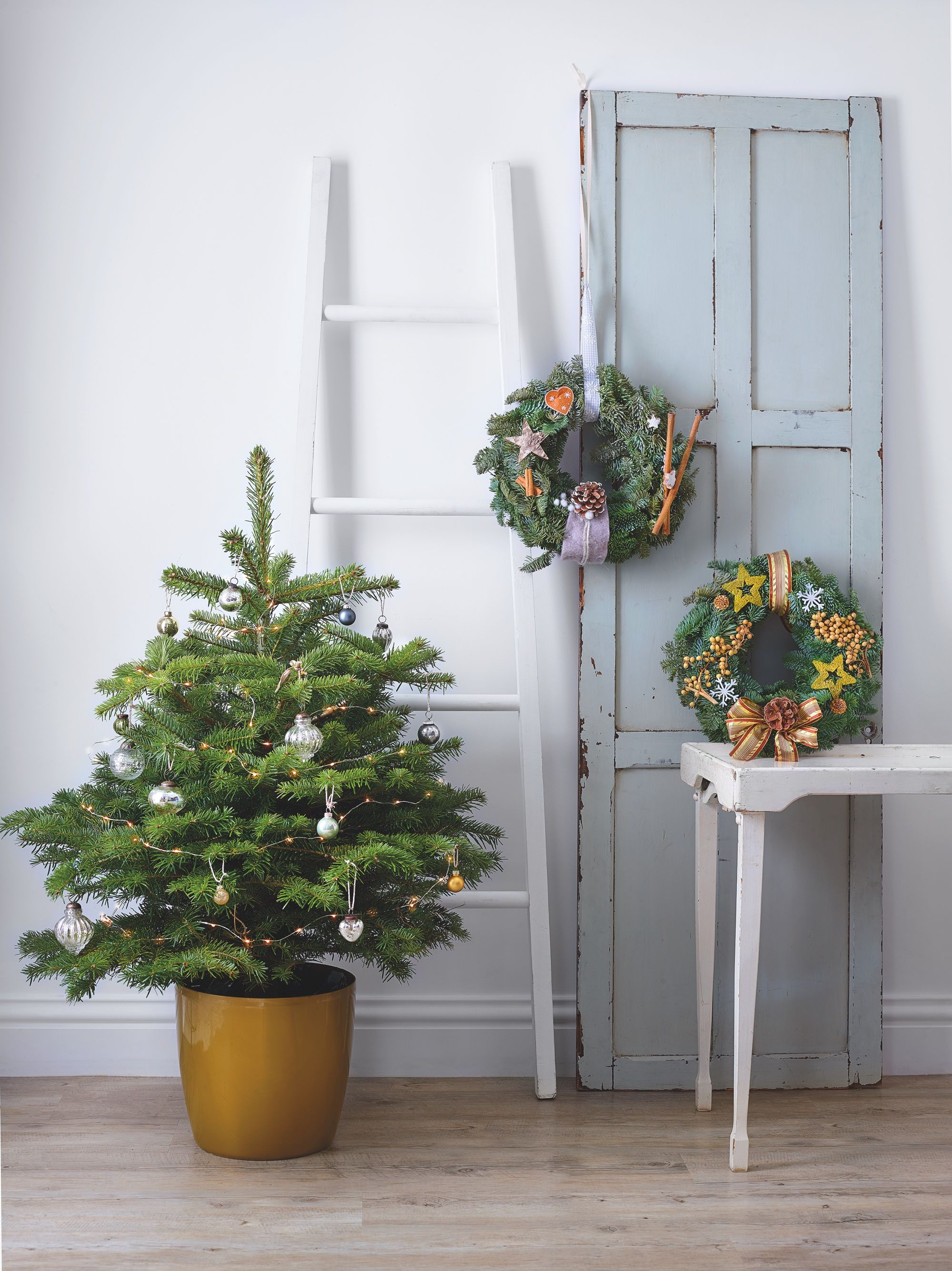 Lidl's gorgeous real Christmas trees land in store next week