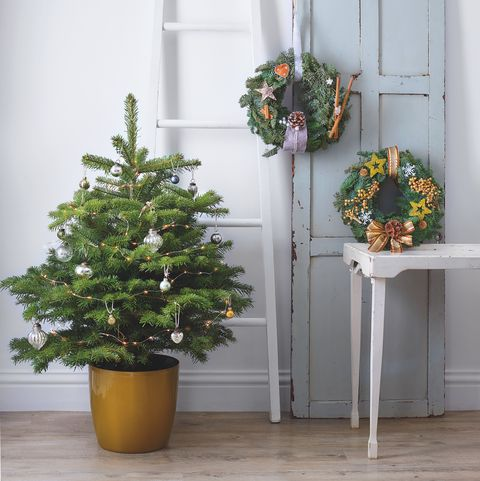 Lidl's real Christmas trees are back for 2019