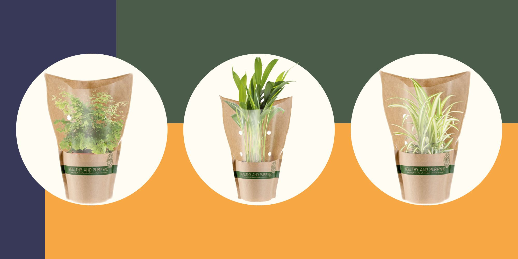 Lidl is selling air-purifying houseplants for just £2.79 each
