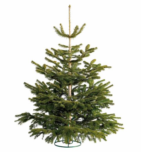 The Real Christmas Tree Farm: Lidl Is Now Selling Real British Christmas Trees