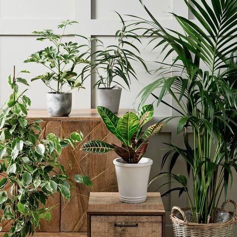 morrisons launches stylish and affordable houseplant range