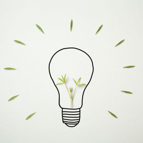 Light bulb drawn on drawing paper with plants