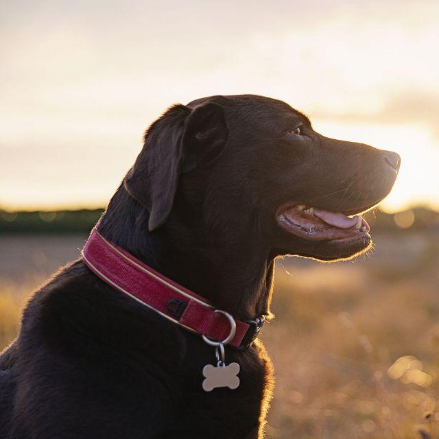 light up dog collars
