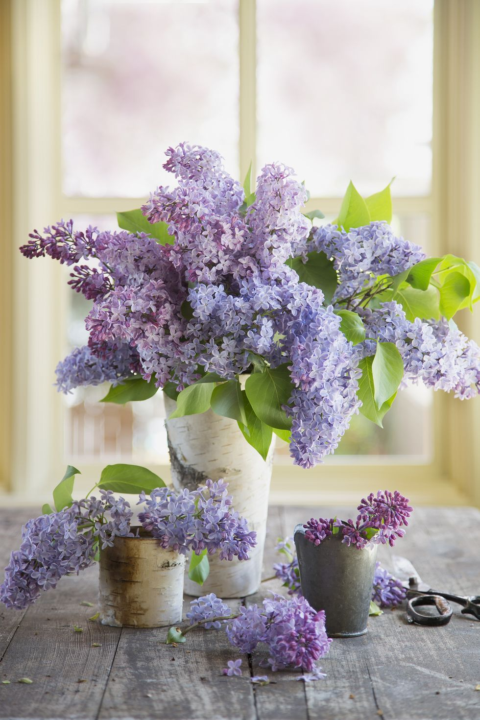 Image result for lilacs bouquet