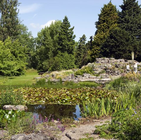 the limestone rock garden at the cambridge university botanic garden, england